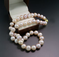 Beautiful cultivated pearl necklace in rose with silvery overtone, 585 yellow gold clasp --- no reserve price ---