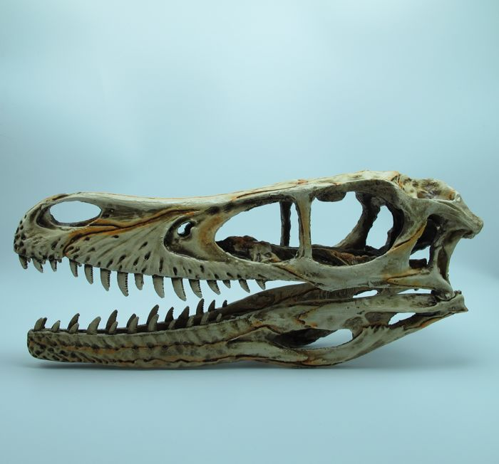 Full-size replica skull with stand  of a Velociraptor- 24 x 11 x 7 cm