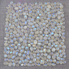 Top Blue Flash Genuine Moonstone Gemstones lot - 830 ct