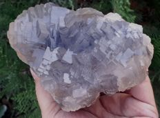 Perfect Structure of Fluorite crystals - 155 x 95 x 85mm - 1540 gm