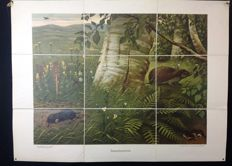 "Rare first edition of the Koekkoek school poster ""Insectivores"" on linen. Folded version in very good condition with the hedgehog, the mole and the vole"