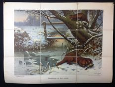 "Rare first edition of the Koekkoek school poster ""predators in winter"" on linen. Folded version in very good condition. With the ermine, the otter and the marten."