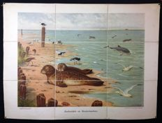 "Rare first edition of the Koekkoek school poster ""Seals and porpoises"" on linen. Folded version in very good condition The oystercatcher and the seagull look beautiful on it."