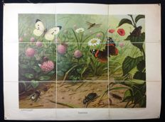 "Rare first edition of the Koekkoek school poster ""Insectivores"" on linen. Folded version in very good condition With butterflies (cobbler) and beetles"