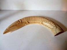 Antique carved Hippopotamus tusk - crocodile in relief - Hippopotamus amphibius -