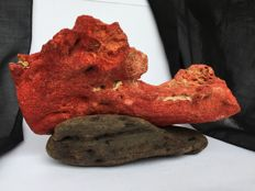 Unusually large piece of Red Coral on driftwood stand - Corallium rubrum - 18.5 x 11.5cm - 497gm