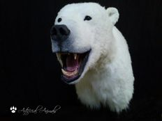 Superb life-sized Polar Bear replica shoulder-mount - Ursus maritimus - 95cm