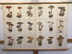 School poster mushrooms 1 and mushrooms 2