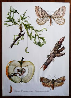 5 old Biology school maps with insects such as beetles and moths