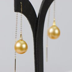 Earrings made of 18 kt yellow gold with golden South Sea pearls Ø 10.2 - 11.4
