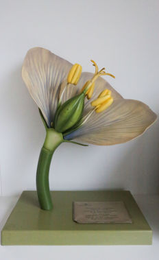 Huge anatomic FLOWER