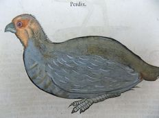 Conrad Gesner (1516-1565) - One leaf with 2 large woodcuts - Ornithology: Partridge, Plover - 1669