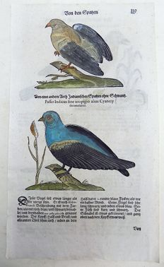 Conrad Gesner (1516-1565) - One leaf with 4 large woodcuts - Ornithology: Passer Indicus, Sparrow, Accentor - 1669