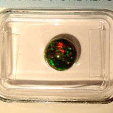 """""""Welo"""" Opal – 1.38 ct, No Reserve Price"""