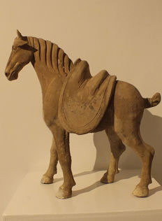 A Painted Grey Pottery Figure of Striding Horse with Separate Saddle, Tang Dynasty, Tl Test, H 43 cm.