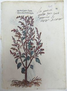 Leonhard Fuchs [1501 - 1566] - 2 botanical woodcuts - Garfen Orache [ Atriplex hortensis ]; Atractylis - With manuscript descriptions - 1549