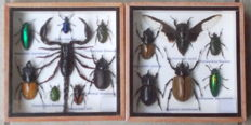 Two insect collection boxes – 15 cm by 15 cm (2).