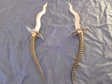 Flame-bladed daggers with antelope horn handles, India