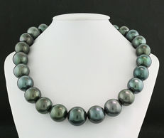 Tahiti pearls 15 to 17.8 mm of rare size and beautiful lustre --- NO Reserve Price! ---