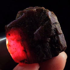 Natural unheated star ruby specimen rough - 209,4 ct