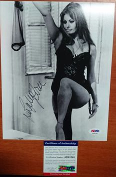 Beautiful photo of Sophia Loren, movie star in sexy posture, with her original signature, PSA / DNA authenticity certificate included