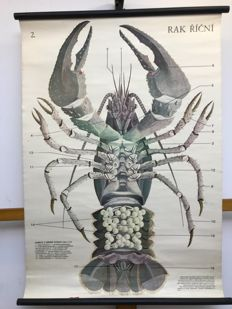 School poster lobster  RAC RICNI