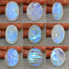 Top Blue Flash Genuine Moonstone Gemstones lot - 455 cts - 9 pcs