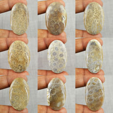 Genuine Coral Fossil Gemstones lot - 400 cts (9 pcs)