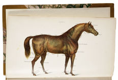 Thomas Brown - The Complete Modern Farrier: A Compendium of Veterinary Science and Practice. With fourteen full-page coloured plates - 1900