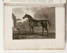 Richard Lawrence - The Complete Farrier, And British Sportsman: Containing A Systematic Enquiry Into The Structure And Animal Economy Of The Horse, The Causes, Symptoms, And Most-Approved Methods Of Prevention And Cure Of All The Various Diseases To Which He Is Liable - 1816