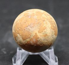 Perfect unhatched fossil turtle egg : Testudoolithus - 3.6 cm - 100% natural