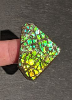 High quality ammolite specimen - 43 x 31 x 5 mm (11.6 gm)