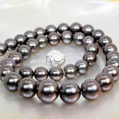 Rare necklace of Tahitian aubergine pearls Ø 10 x 14 mm - top quality
