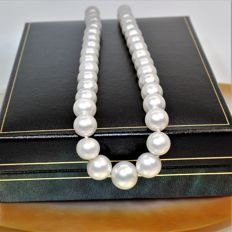 Beautiful necklace SSP saltwater australian pearls Ø9x12,1 mm - 925 Silver clasp