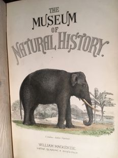 T. Spencer Cobbold & W. Baird - The Museum of Natural History [...] Quadrupeds, Birds, Reptiles, Fishes, Shells and Insects - [ca. 1860]