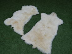 Fine pair of natural white Sheepskins - Ovis aries - 120 x 75cm  (2)