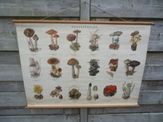 Beautiful school poster with mushrooms (this concerns poster II)