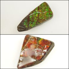 Two large Ammolites with nice patterns and lovely flashes - 3,7 x 3,0 x 0,7 cm - 10 g - 50 ct  and  3,8 x 1,8 x 0,5 cm - 5 g - 25 ct (2)