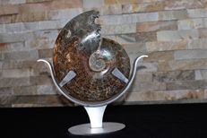 Ammonite entirely in calcite - superb condition with custom-made stand - 23,5 x 20 x 5 cm - 1,842KG ( Ammonite)