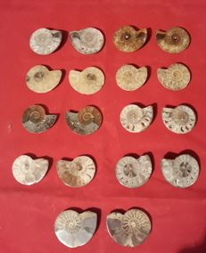 Lot of ammonites cleoniceras sp - 36 x 41 mm - ( 18 ) 9 pairs