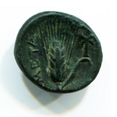 Greek Antiquity - Magna Grecia – Lucania, Metapontion Mint - 300-250 BC – AE Bronze (3,41 gr., 16 mm.)