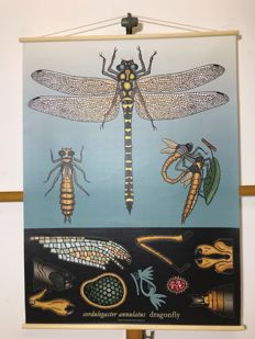 School poster Dragonfly