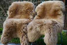 Top quality Beige Sheepskins - Ovis aries - 130 x 75 cm (2)