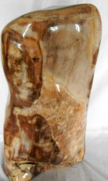 Special piece of petrified wood - 580 x 280 mm - 22.8 kg