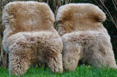 Pair of subtle Gold/Beige Sheep Skins - Ovis aries - 125 x 75 cm (2)