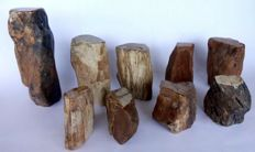 9 trunks of petrified wood - approx. 80 to 220 mm - approx. 13750 g