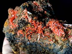 "Fine ""red devil"" deep red Crocoite - 10 x 9 x 5 cm - 550 gm"