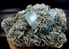 Large Sky Blue Aquamarine Crystals Cluster on Muscovite - 68 x 180 x 120 mm - 1709 gm