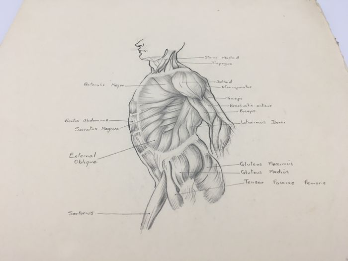 18 Human Body Parts Anatomy Pencil Drawings By Yvonne Hill Catawiki