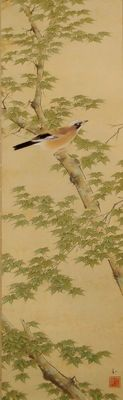 Jay in a maple tree by Takeuchi Seiho 竹内 栖鳳 school - Japan - early 20th century